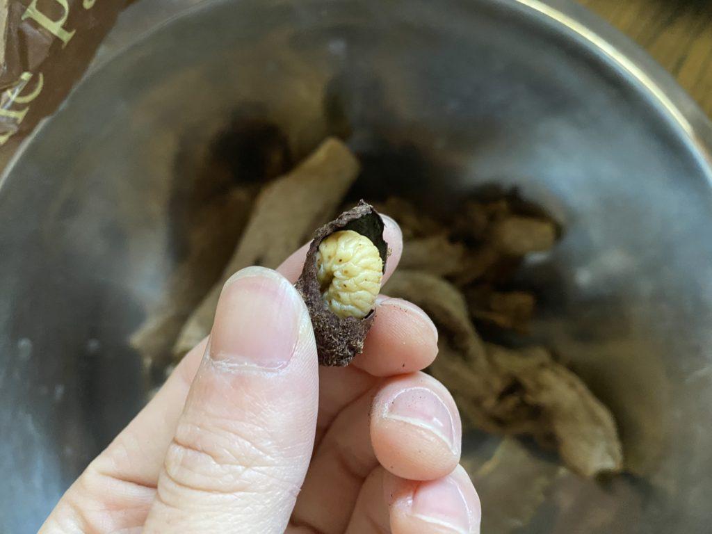 フェモラータオオモモブトハムシの蛹室を破いた