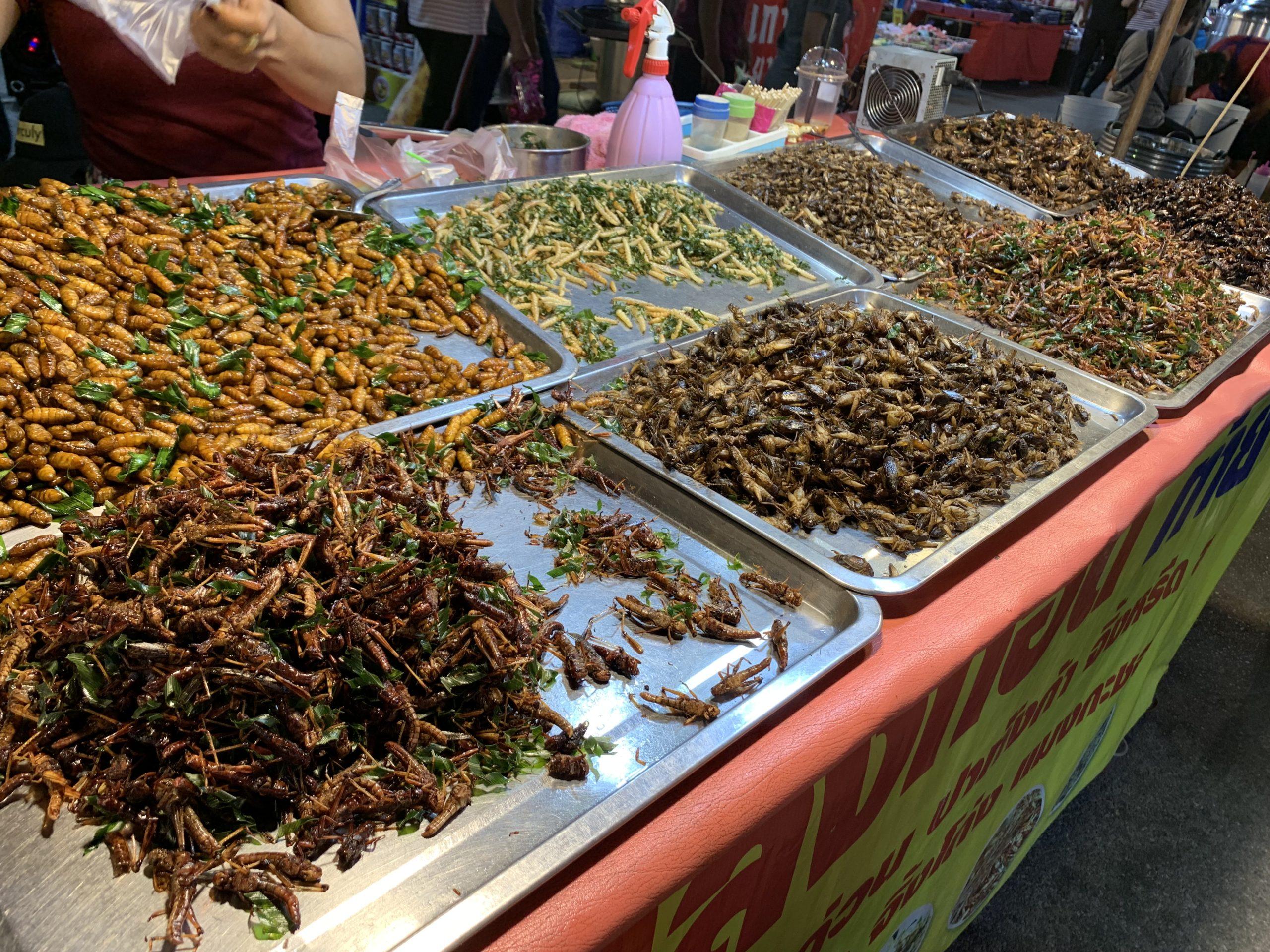 タイで昆虫食と出会った話